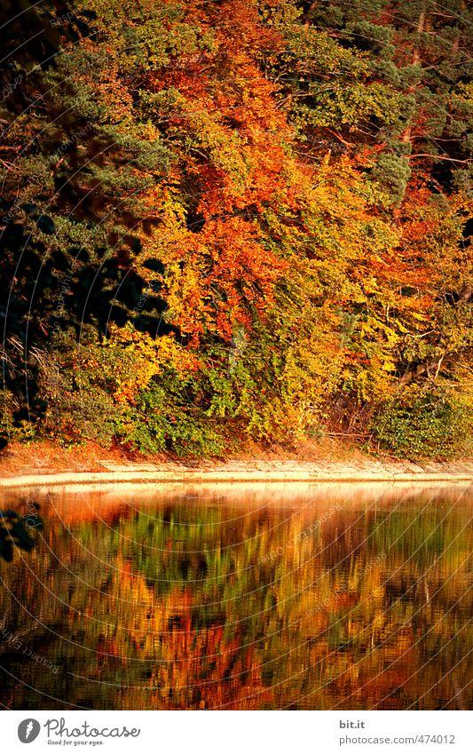 am Bärensee Ferien & Urlaub & Reisen Tourismus Ausflug wandern Umwelt Natur Landschaft Pflanze Wasser Klima Schönes Wetter Wald Seeufer Teich Fluss mehrfarbig