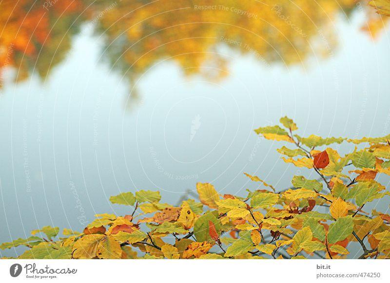 Bärensee 2012 | Rückschau Himmel Natur Ferien & Urlaub & Reisen blau Pflanze Wasser Baum Blatt Wald Umwelt Herbst Glück See Stimmung Vergänglichkeit