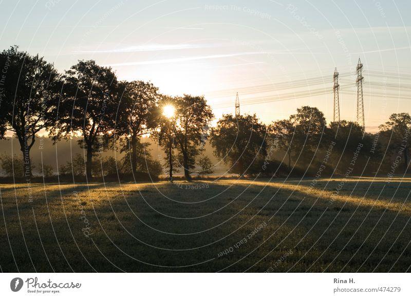 Abends Umwelt Natur Landschaft Himmel Frühling Sommer Schönes Wetter Baum Wiese grün Strommast Sonnenstrahlen Farbfoto Außenaufnahme Menschenleer