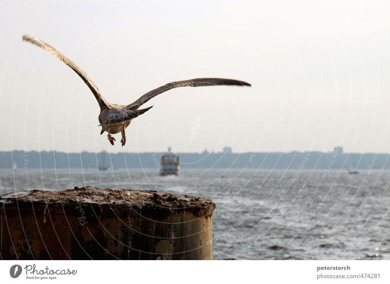 Absprung Himmel Wasser Tier Bewegung Küste Freiheit Holz Horizont fliegen Wellen frei Energie Beginn ästhetisch einzigartig Hafen