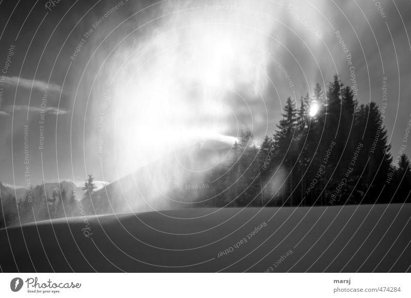 schwarzweißgrau | Durchbruch Himmel Natur Pflanze Sonne Baum Wolken Winter Berge u. Gebirge Schnee Freiheit außergewöhnlich Schneefall Eis Nebel leuchten