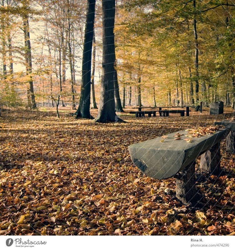 Herbst Umwelt Natur Landschaft Baum Wald leuchten natürlich ruhig Holzbank Picknick Herbstlaub Buchenwald Quadrat Baumstamm Farbfoto Außenaufnahme Menschenleer
