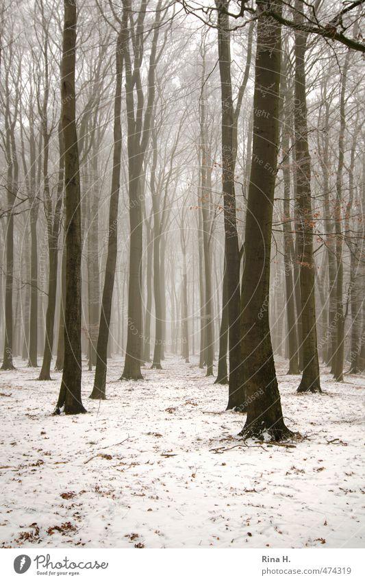 WinterWald Umwelt Natur Landschaft Nebel Schnee Baum kalt natürlich Schneise kahl Traurigkeit Gedeckte Farben Außenaufnahme Menschenleer Textfreiraum unten