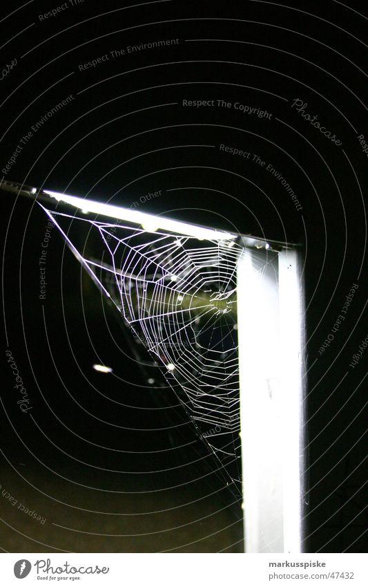 spinnen netz Lampe Netz Insekt Spinne