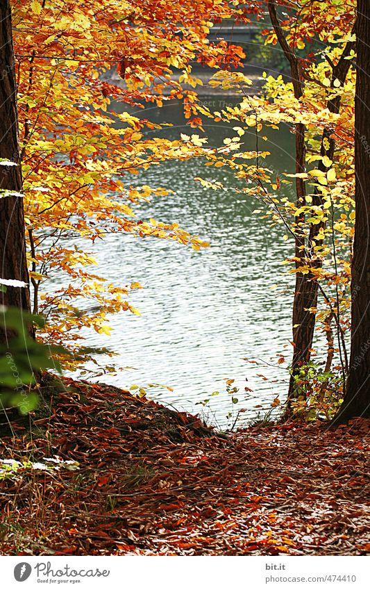 am Bärensee Umwelt Natur Landschaft Pflanze Urelemente Erde Wasser Herbst Klima Schönes Wetter Küste Seeufer Teich natürlich Wärme Stimmung Wandel & Veränderung
