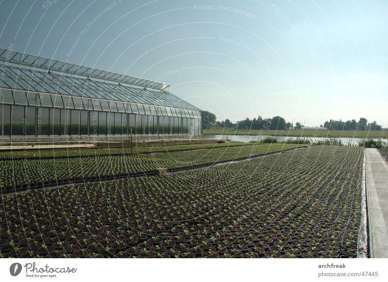 Vier- und Marschlande Gewächshaus Landwirtschaft Herbst Setzling Pflanze Himmel Garten Gartenbau Zentralperspektive Fluchtlinie züchten