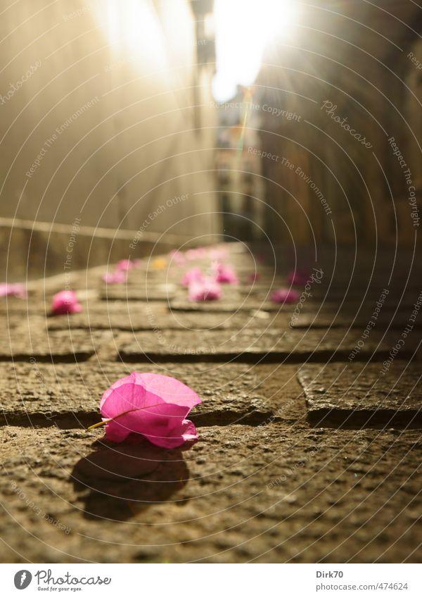 Vom Dachgarten her regnet es bunt. Sonne Sonnenlicht Sommer Schönes Wetter Pflanze Blume Blüte Zierpflanze Sevilla Stadt Altstadt Menschenleer Straße