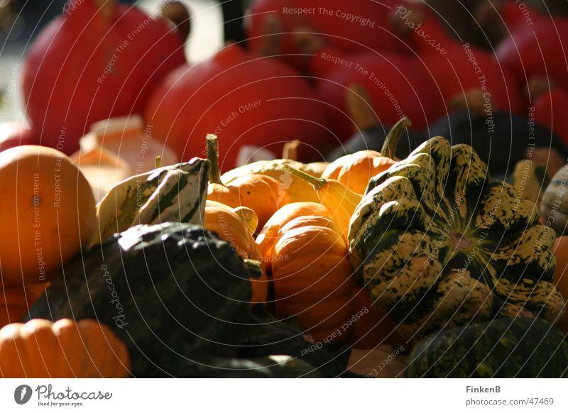 kürbis Sonne Herbst Gemüse Markt Kürbis