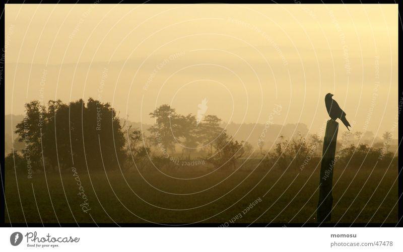 ...einsamer Morgen Ferne Herbst Landschaft Nebel Sträucher Krähe