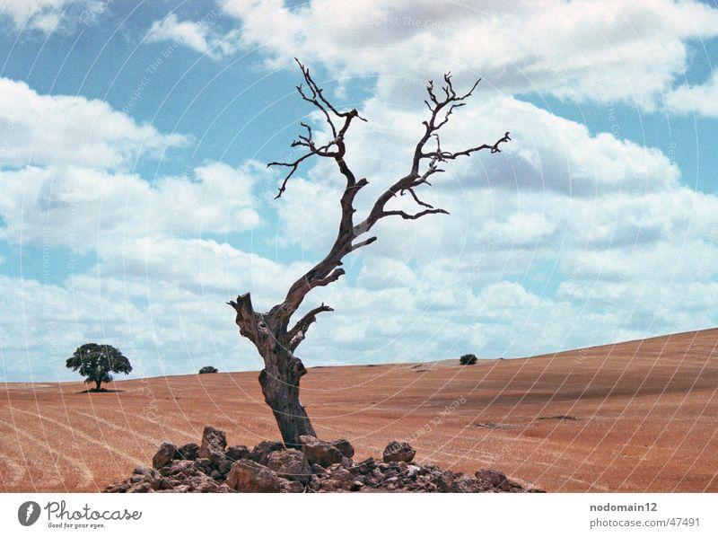 Baum in Andalusien Spanien Feld Kornfeld einzeln trocken Wiese Wolken Trauer Außenaufnahme spain Kanu Einsamkeit Natur drausen Wüste Tod Amerika Landschaft