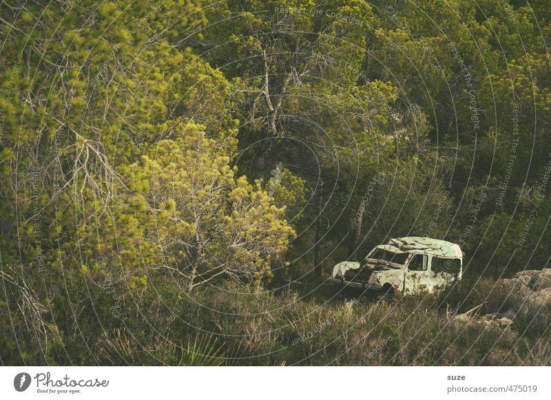 Alter Weißer Sommer Umwelt Natur Landschaft Baum Wiese Wald Verkehrsmittel Fahrzeug PKW Oldtimer alt kaputt retro trist trocken grün Einsamkeit Vergangenheit