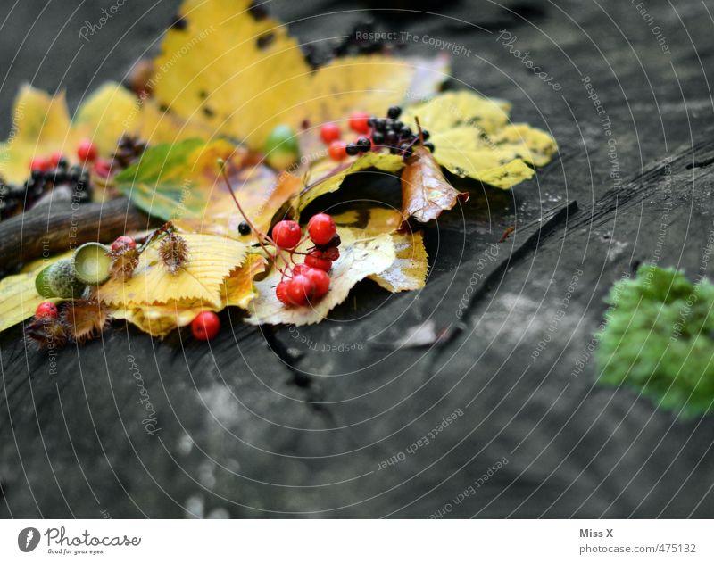 Vogelbeeren Lebensmittel Frucht Umwelt Pflanze Herbst Blatt dehydrieren mehrfarbig Herbstlaub Baumfrucht Sammlung Herbstfärbung Eicheln Holunderbeeren Baumstamm