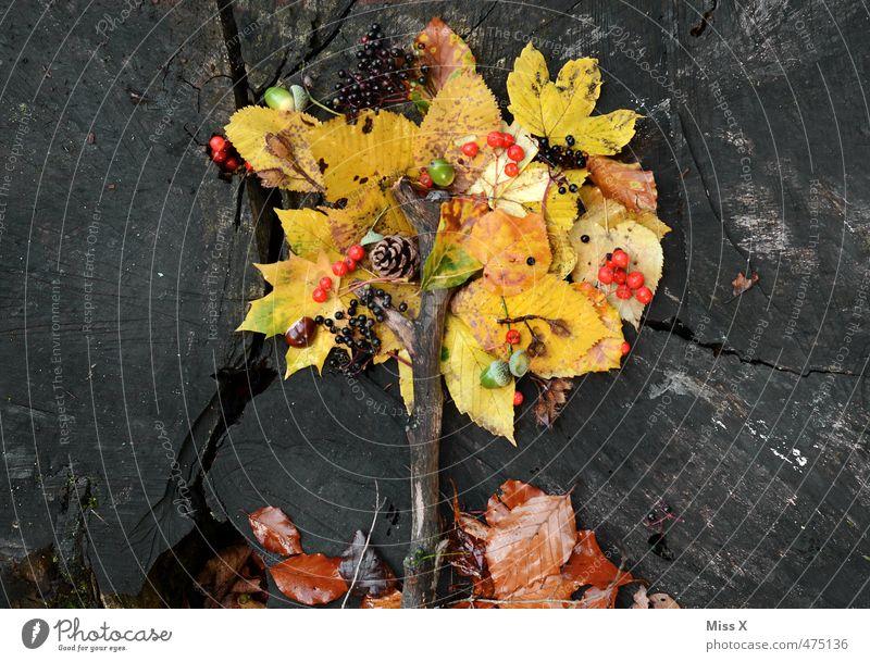 Herbstbaum Lebensmittel Frucht Ernährung Basteln Kinderspiel Dekoration & Verzierung Baum Blatt mehrfarbig Stimmung Natur Herbstlaub herbstlich Herbstfärbung