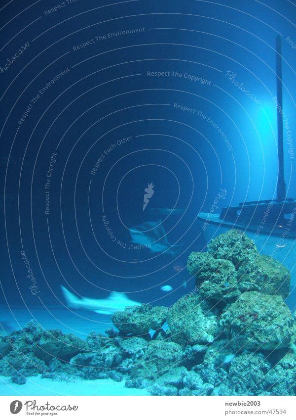 Blue Shark Meer hai aquarium schiff blau unterwasser