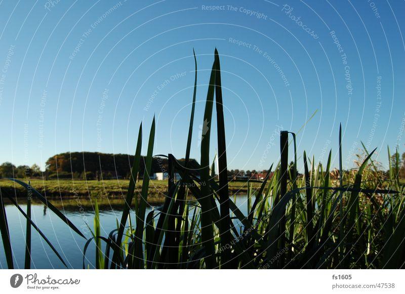 die schönsten Farben der Welt... Wasser Baum Meer grün blau See Fluss Schilfrohr Dinkel