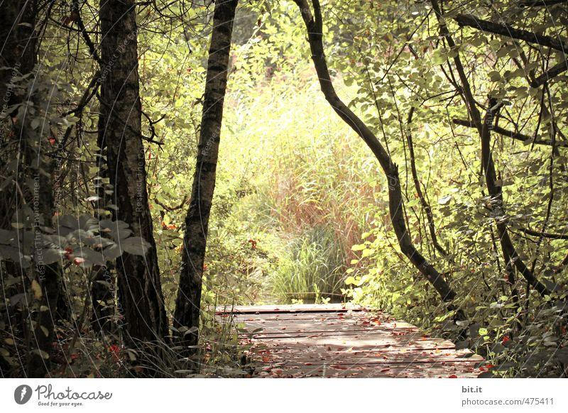 Steg zum Licht Natur Ferien & Urlaub & Reisen Pflanze grün Baum Erholung Landschaft Einsamkeit ruhig Wald Umwelt Holz See Park Tourismus Idylle