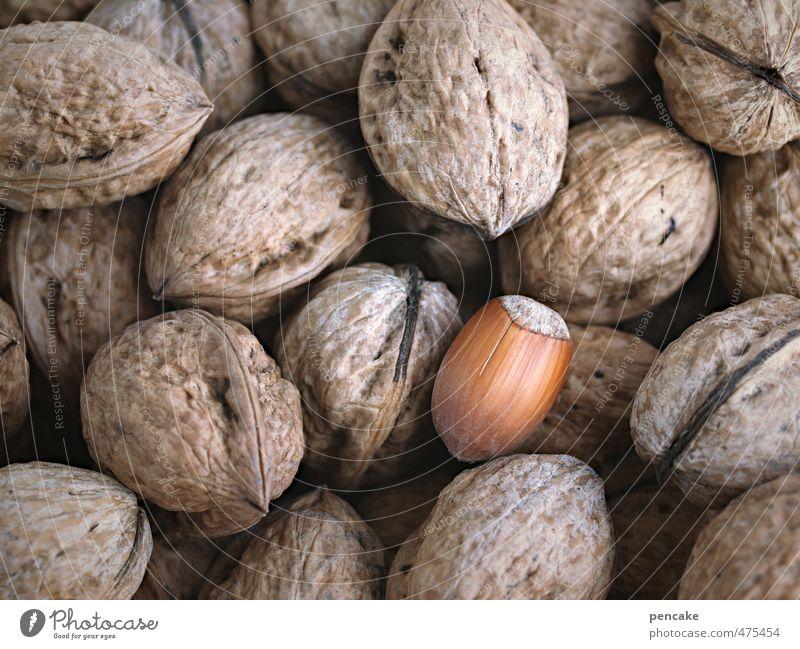 inklusion Lebensmittel Kultur Natur Zeichen entdecken warten authentisch Gesundheit einzigartig Einschluss Gesellschaft (Soziologie) Nuss Haselnuss Walnuss