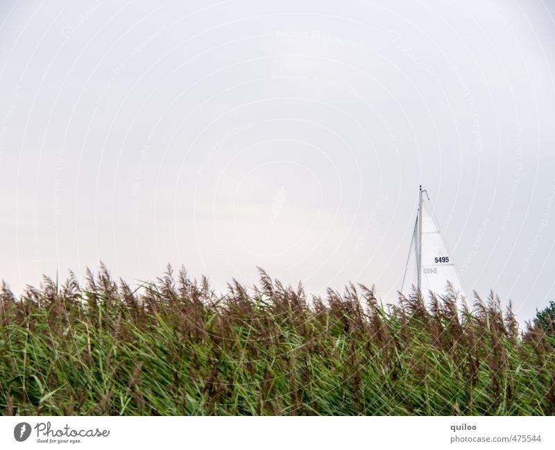 Versteckter Segler Natur Ferien & Urlaub & Reisen grün weiß Einsamkeit ruhig Landschaft Küste oben träumen braun Freizeit & Hobby Ausflug Schutz fahren Seeufer