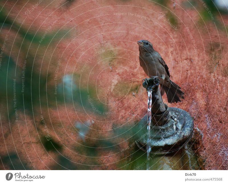 An der Tränke grün Wasser rot Tier schwarz Wand feminin Mauer Garten Vogel Park Fassade sitzen Wildtier Trinkwasser niedlich