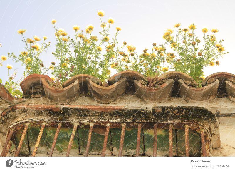 Andalusiens Dächer Ferien & Urlaub & Reisen schön grün Pflanze Sommer Erholung Blume Haus Fenster Wand Gras Mauer Blüte Stil Stein Garten