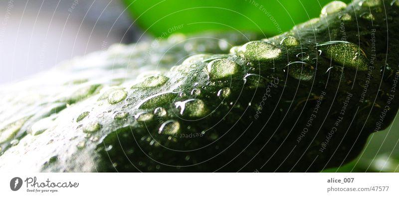 Tropfen auf einem Blatt grün Pflanze Blume nass Wassertropfen Makroaufnahme