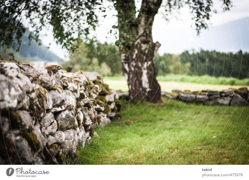 Steinmauer Baum Moos Mauer verwittert Birke alt nah Traurigkeit Baumstamm Gras grün Farbfoto Außenaufnahme Menschenleer Tag Schwache Tiefenschärfe