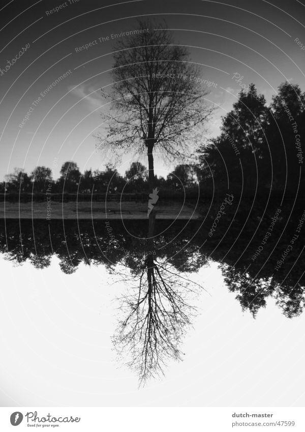 Wie rum? Spiegel Baum Fotografie Sommer Niederlande See schwarz weiß Bach Wasser spiegebild Fluss spiegelverkehrt Himmel
