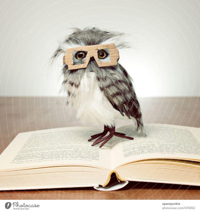 Leseeule schön Tier gelb lustig außergewöhnlich Buch Tisch beobachten Brille Papier lesen Neugier Spielzeug skurril Karton Humor