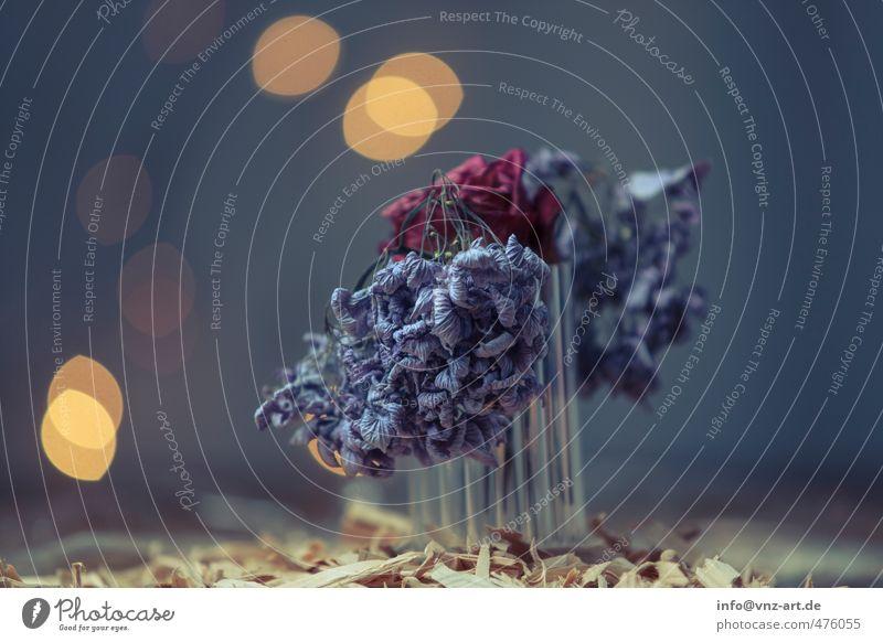 FlowerR Holz Splitter Holzsplitter Farbfoto Studiofoto Licht Schatten Beleuchtung Stimmung Dynamik schnitzen Weihnachten & Advent fällen fallen Unschärfe blau