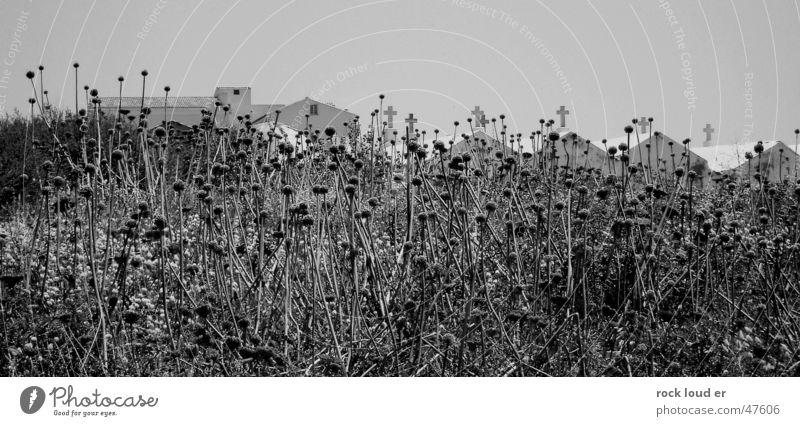 Zustand Tod Natur weiß schwarz Tod Landschaft Rücken Korsika Gruft Bonifacio stilistisch