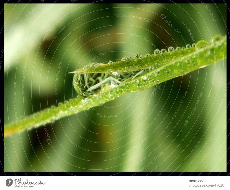 Spiegeltropfen Gras Halm Wiese nass Reflexion & Spiegelung Wassertropfen Seil Regen