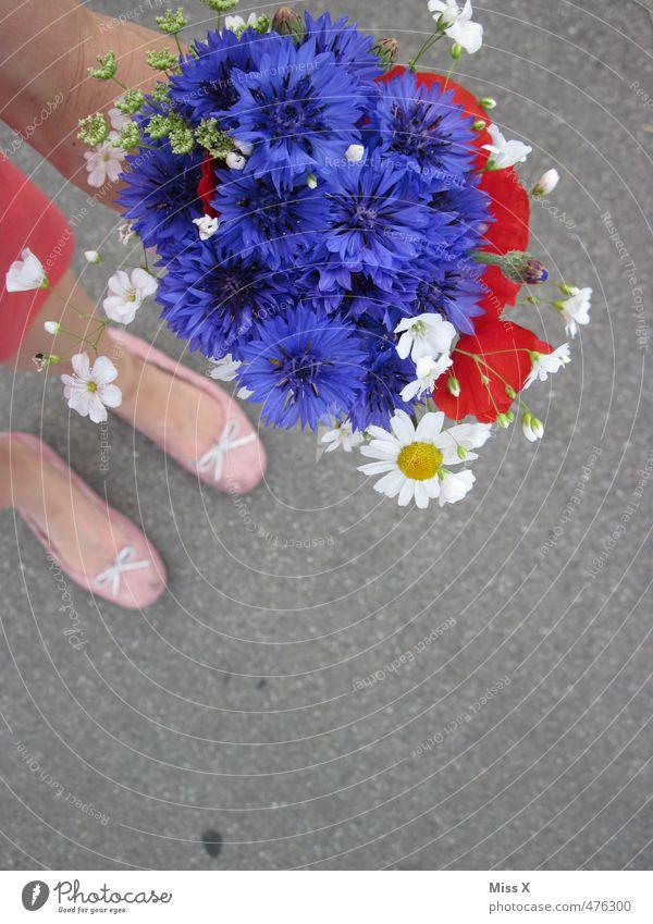Blumenstrauß Feste & Feiern Valentinstag Muttertag Hochzeit Geburtstag Mensch Beine Fuß Frühling Sommer Blüte Blühend Duft Liebe Verliebtheit Romantik Kornblume