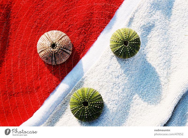 Badetuch mit Seeigelskelett Meeresfrüchte Skelett Wunder Sommer rot weiß grün Erholung tauchen Meerestier Mikrofon Farbe Schatten Sonne Unterwasseraufnahme