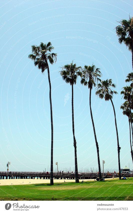 Santa Barbara Beach Himmel Baum Sonne Meer Sommer Strand See Sand USA Amerika Palme Kalifornien St. Barbara