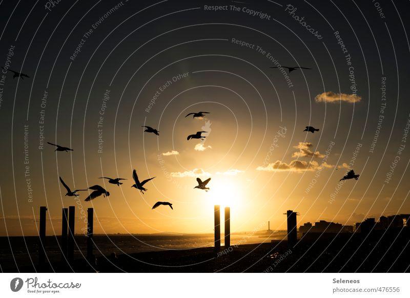 Zugunruhe Himmel Natur Ferien & Urlaub & Reisen Sonne Meer Wolken Tier Ferne Umwelt Küste Freiheit natürlich Horizont Vogel fliegen gold