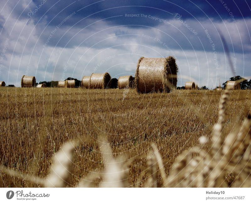 Ernte 2005 Stroh Feld Rügen rund Wolkenhimmel Stoppelfeld Halm Hintergrundbild Strohballen Landschaft