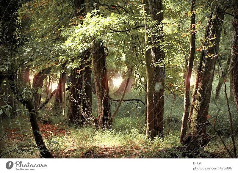 Märchenwald Natur Pflanze Umwelt Wege & Pfade träumen Lebensfreude Vergänglichkeit Schönes Wetter geheimnisvoll Umweltschutz Gott Zauberei u. Magie Weisheit