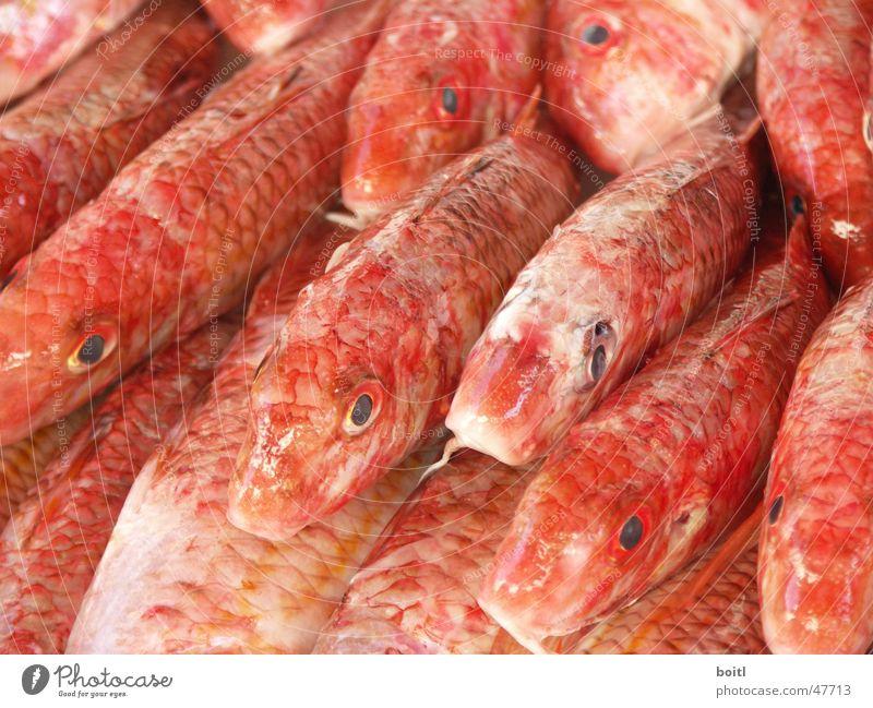 Rote Fische rot Rudel Tod Markt Auge Schwarm