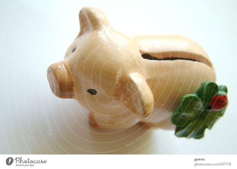 Sparschwein Geld reich Schwein sparen Marienkäfer Spardose Schlitz