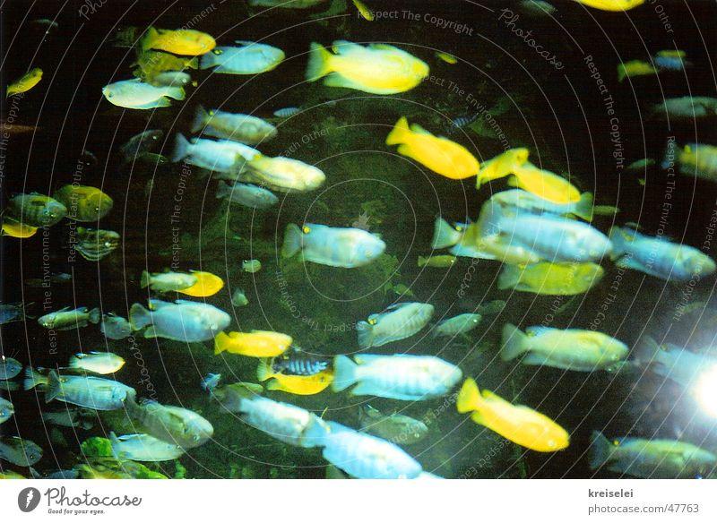 gegen den strom Meer Fisch Wasser Schwimmen & Baden