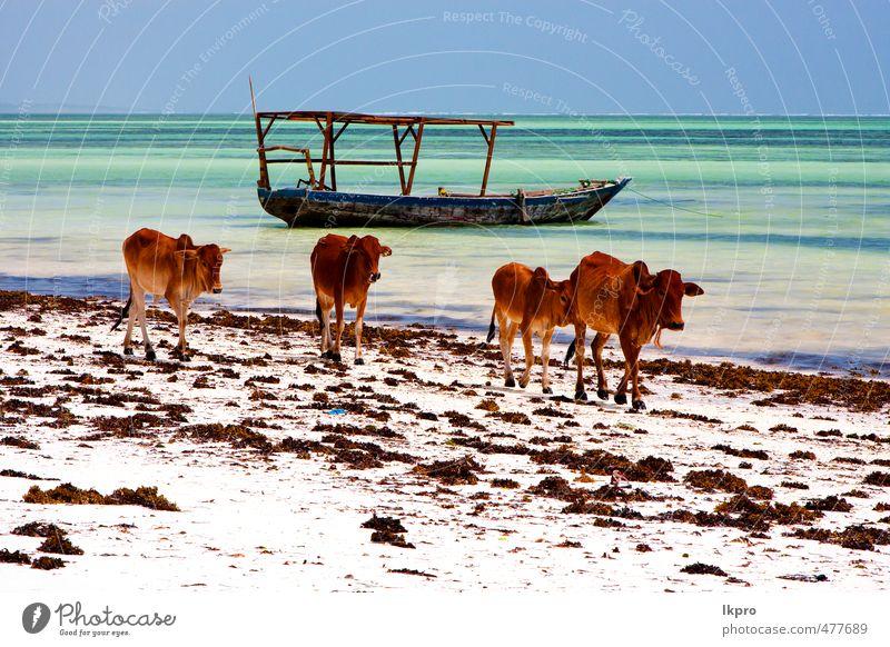 pirague in der blauen lagune entspannen von zanzibar afrika Ferien & Urlaub & Reisen Tourismus Ausflug Strand Meer Insel Wellen Segeln Natur Tier Sand Wolken