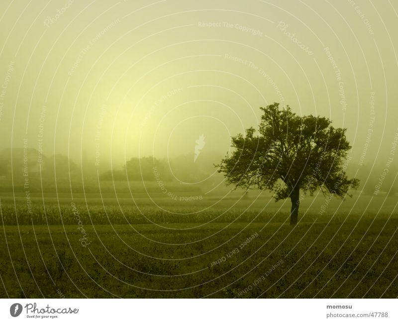 Nebelbaum Baum Sonne Herbst Landschaft