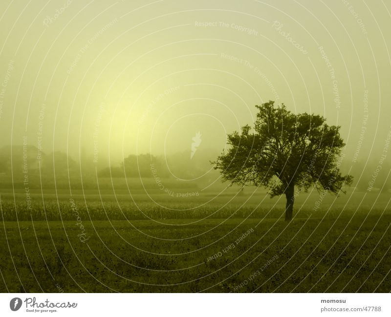 Nebelbaum Baum Sonne Herbst Landschaft Nebel