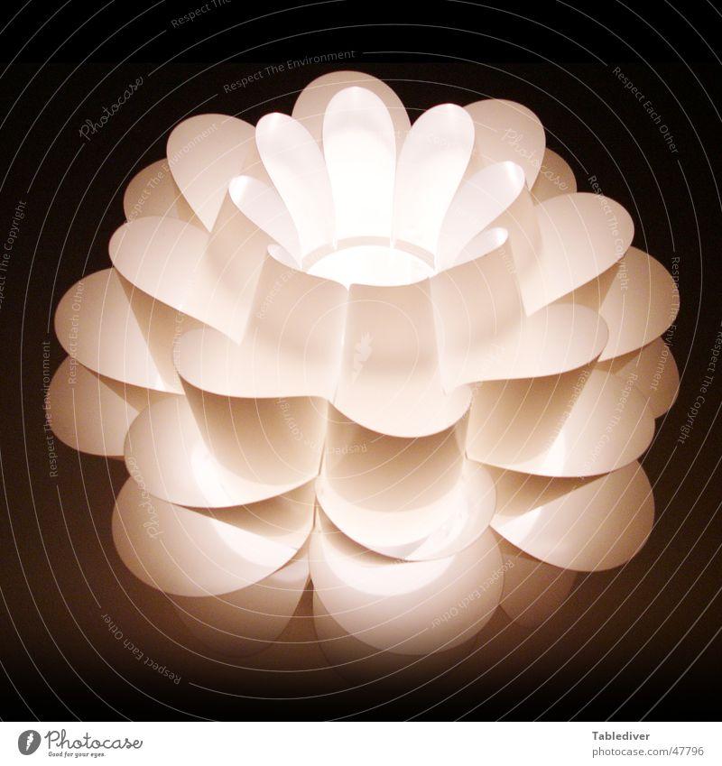 Lichtblume dunkel Lampe Blume Makroaufnahme Blüte Blütenblatt Schatten Beleuchtung