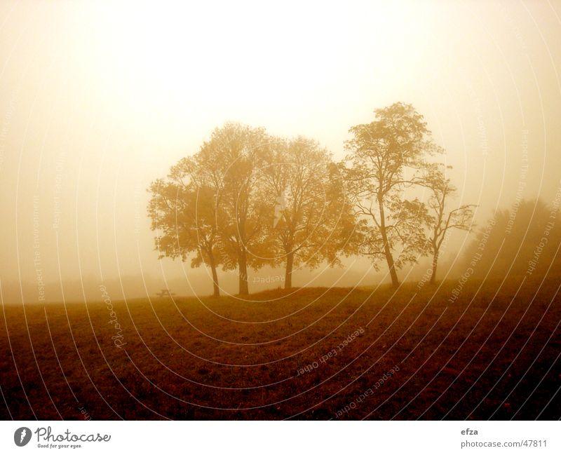 Wiener Herbst Baum Wiese Himmel