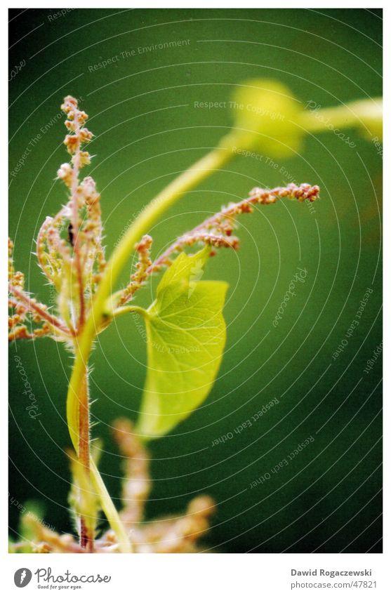 Microglobin Natur Blume grün Pflanze Kunst nah