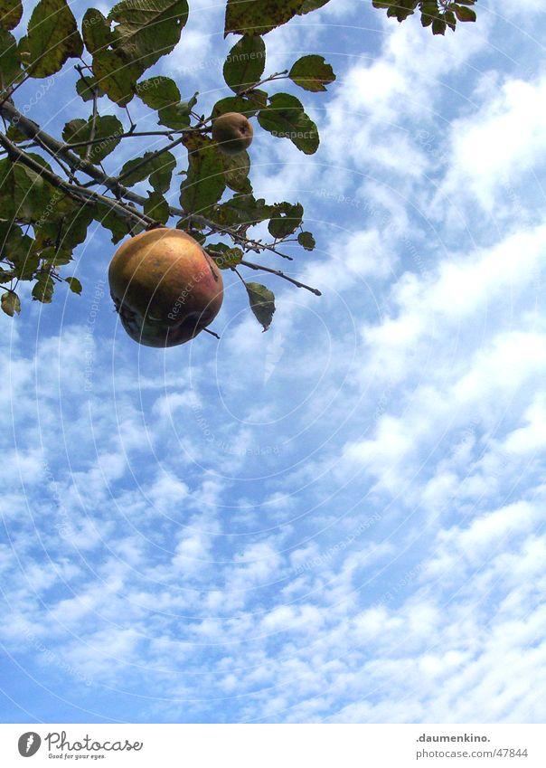 Apfel am Baum Himmel Natur Sonne Landschaft Blatt ruhig Wolken Leben Garten Freiheit Frucht Kraft Kraft Symbole & Metaphern Apfel Amerika