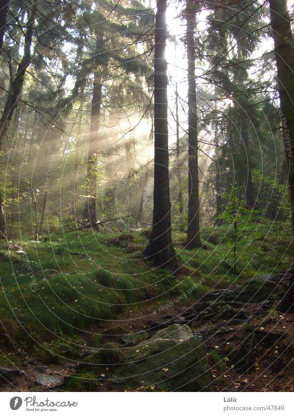 Oktober Sonne wandern Landwirtschaft Forstwirtschaft Umwelt Natur Landschaft Pflanze Herbst Baum Wiese Wald Erholung ruhig Fichte Farbfoto Außenaufnahme