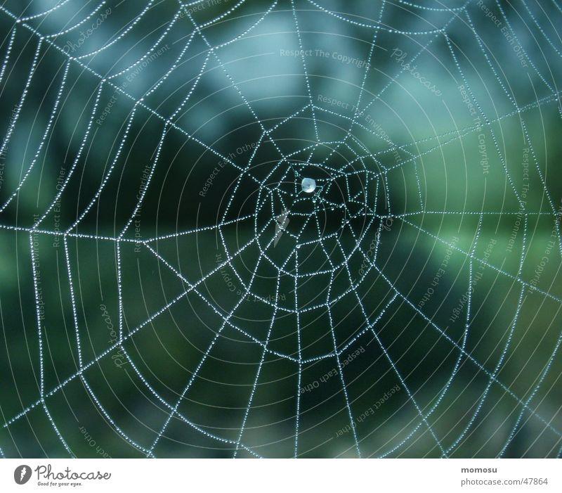 ..ins Blau gesponnen Spinnennetz Herbst Nebel Netz Seil Wassertropfen blau
