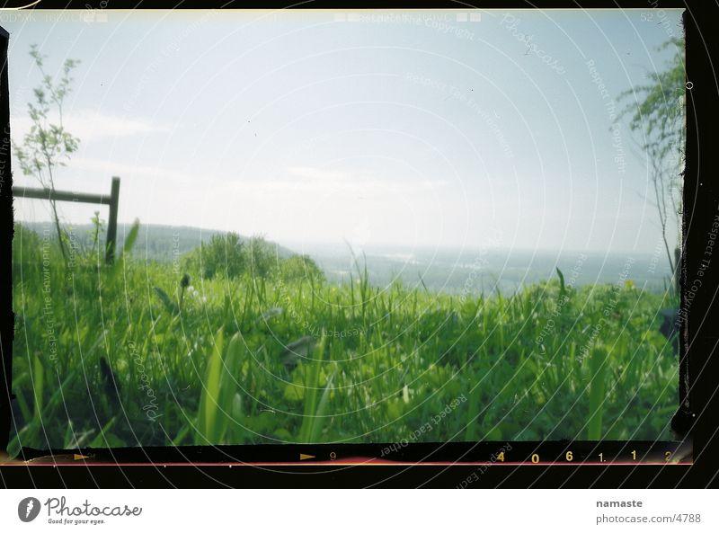 käferlandschaft Natur schön Freude Gras Frühling Landschaft Stimmung